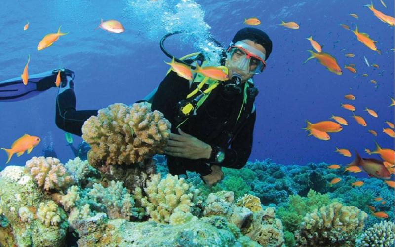 Image result for scuba diving in saint brandon
